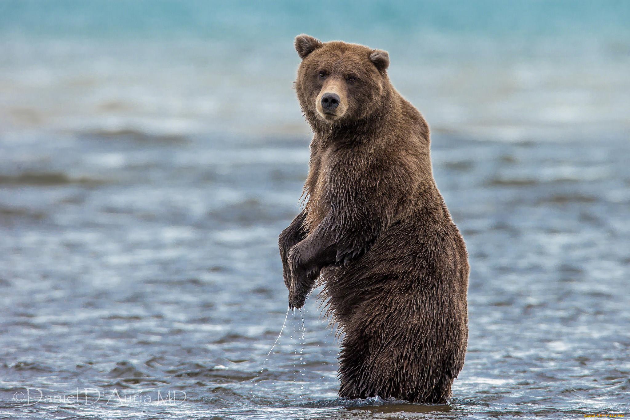 дом идущий медведь картинка приспособления